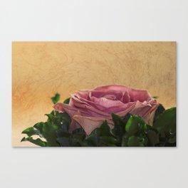 rosea rosa sine aqua Canvas Print