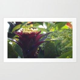 Botanic Garden Flower Art Print