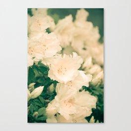 Floral Filigree Canvas Print