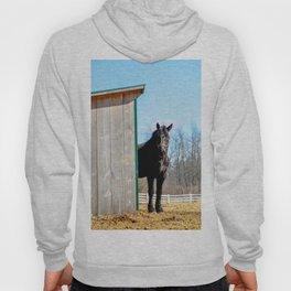 Percheron Horse by Teresa Thompson Hoody