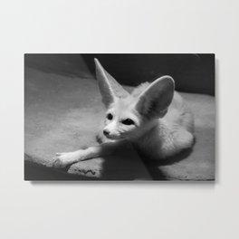 Fennec Fox Metal Print