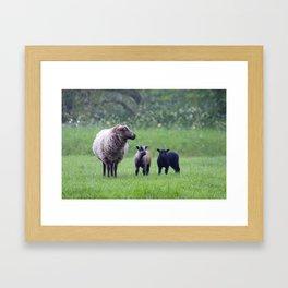 Lamb Love Framed Art Print