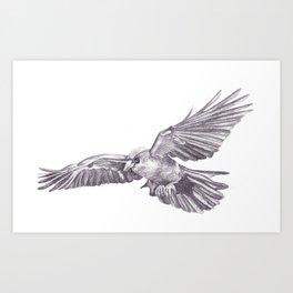 Pencil Drawing - Crow Art Print