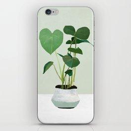 Plant 3 iPhone Skin