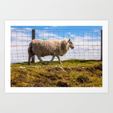 Scottish Sheep Art Print