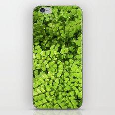 green wet fern IV iPhone & iPod Skin