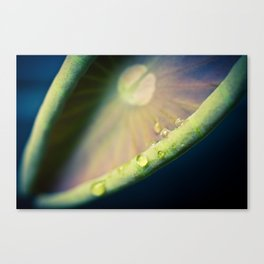 Lotus Leaf Unfurling Photograph by Priya Ghose Canvas Print