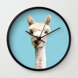 Cute white alpaca portrait on blue sky background Wall Clock