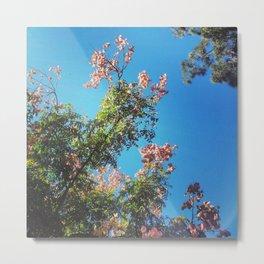 Tree blossom Metal Print