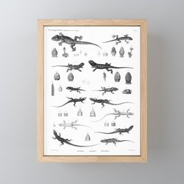 1857 Diagram Zoology: Reptiles Framed Mini Art Print