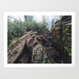 Mount Sutro Art Print