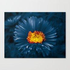 blue aster Canvas Print