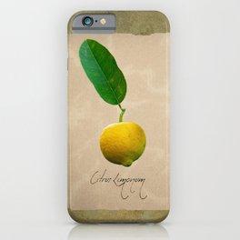 Herbal Apothecary: Lemon iPhone Case
