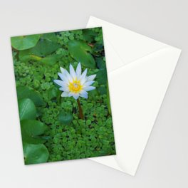 Nymphaea Nouchali Lily Pad Flower in Spring Stationery Cards