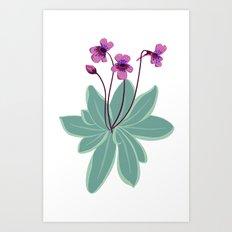 Butterwort Art Print
