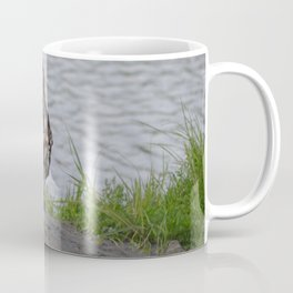 Immature Closeup Coffee Mug