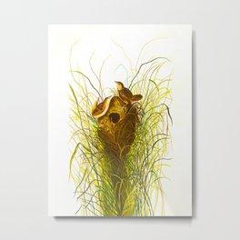 Nuttall's lesser-marsh Wren Metal Print