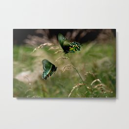 Swallowtail Butterflies Metal Print