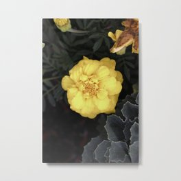 The Soft Yellow Flower (Vintage) Metal Print