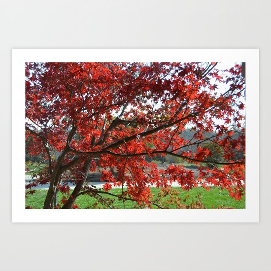 Japanese Maple Art Print