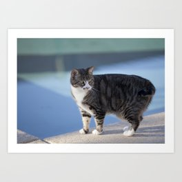 Cat by the Pool Art Print
