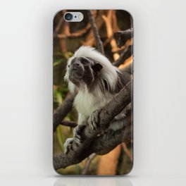Wise Old Monkey iPhone Skin