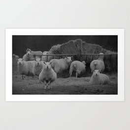 observant, vintage sheep... Art Print