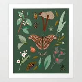 Natural Collec Art Print