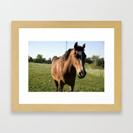 Brown Horse in a Pasture Framed Art Print
