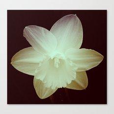 Daffodil 3 Canvas Print