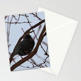 Starling bird illustration Stationery Cards