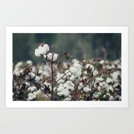 Cotton Field 5 Art Print