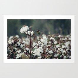 Cotton Field 5 Art Print