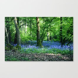 The Bluebell Dell Canvas Print
