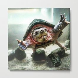 Terrified Turtle Metal Print
