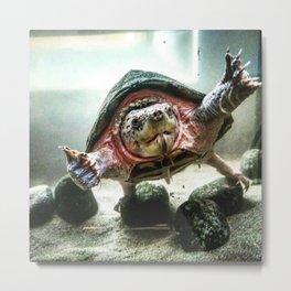 Terrified Turtle Metal Print