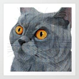 Blue British Shorthair cat Art Print