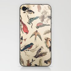 Vintage Songbirds iPhone & iPod Skin