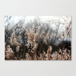 Freedom For The Soul Canvas Print