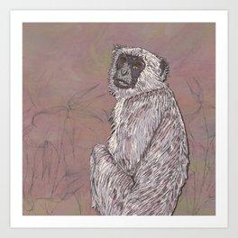 Gray Langur Monkey Art Print