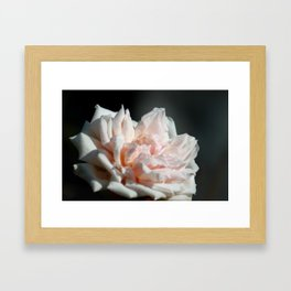 Hollywood Flower II  Framed Art Print