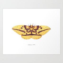Imperial Moth (Eacles imperialis) Art Print