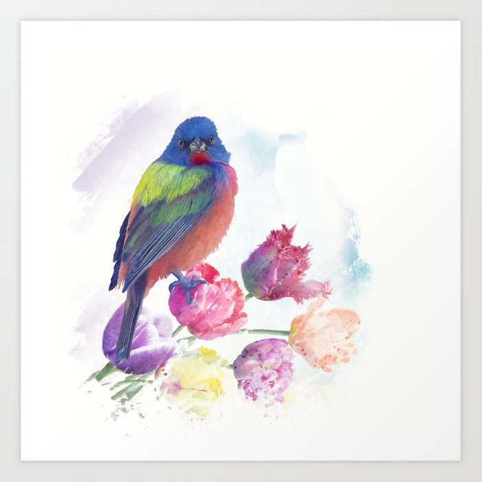 87beaed587a Male Painted Bunting with tulips