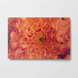 Orange asters. Metal Print
