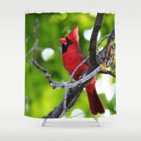 cardinal Shower Curtains featuring Cardinal by C Flynn