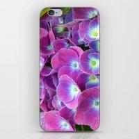 hydrangea iPhone & iPod Skins featuring Hydrangea by Trevor Jolley