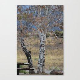 White Birch & Picnic Table Canvas Print