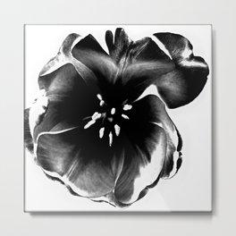 Tulip Blossom Metal Print