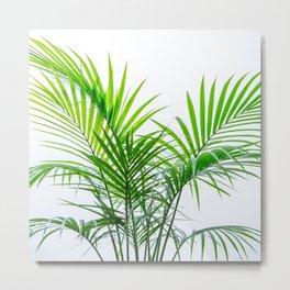 Little palm tree Metal Print