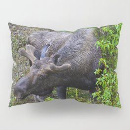 Male Moose on the loose in Jasper National Park | Canada Pillow Sham